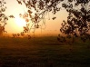 st sauveur le vicomte, les marais à l'aube