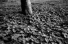 orties au pied de l'arbre
