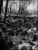 la lande de Lessay aprés un incendie