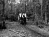 Débardage en forêt